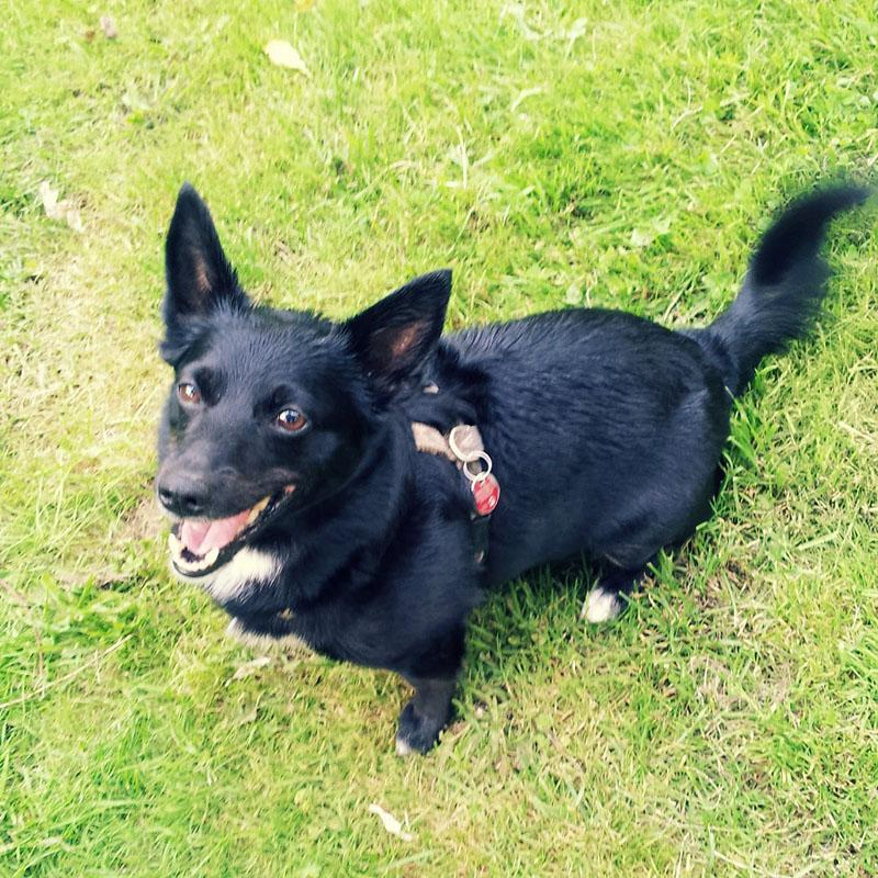 Erfahrungsbericht: So wurde mein Hund dank Kokosöl zeckenfrei