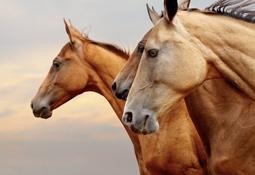 Bio-Kokosöl gegen Juckreiz bei Pferden