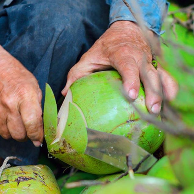 Die Lagerung des Kokosöls von Dr. Goerg