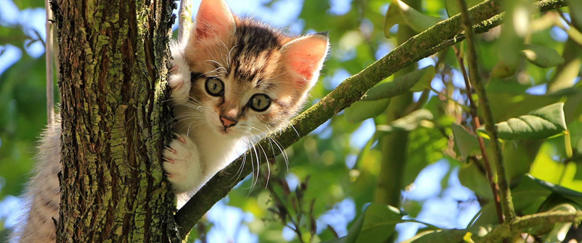 Naturbelassener Zeckenschutz für Katzen