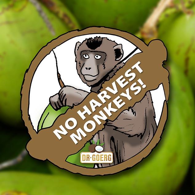 Ernte ohne Affen und keine Palmrodung!