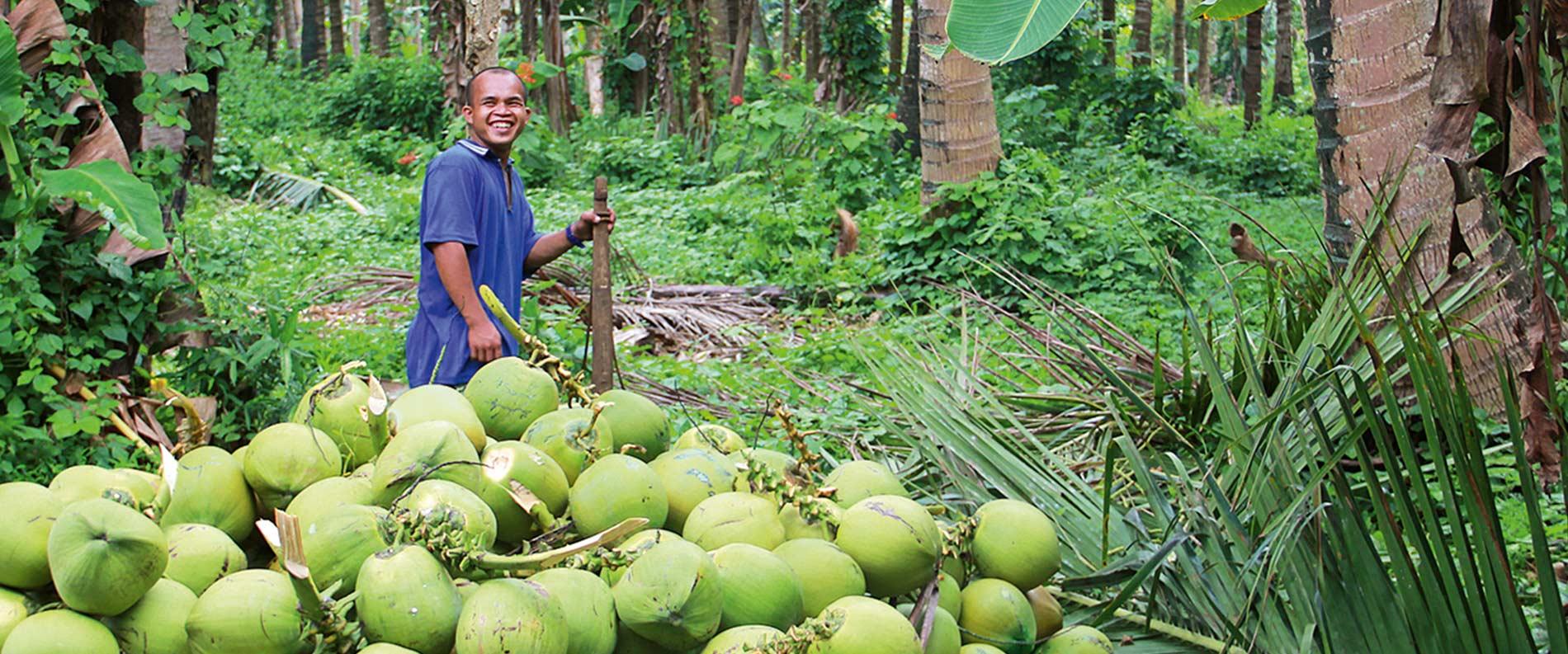 Die Kokosnuss enthält Nährstoffe, Mineralstoffe und Vitamine.