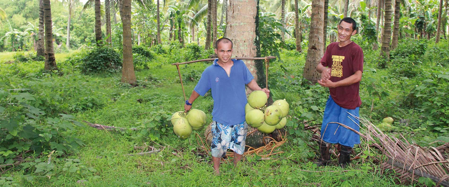 Dr. Goerg Kokosplantagen