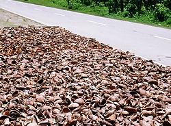 Kokosfleisch Trocknung am Straßenrand