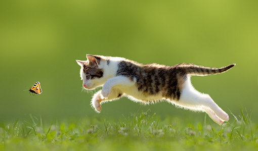 Katze springt über Wiese - Dr. Goerg