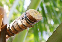 Gesunder Flow für den Darm - die Kokosblüte und das Inulin